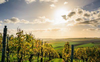10 fechas claves en la historia del vino de mallorca
